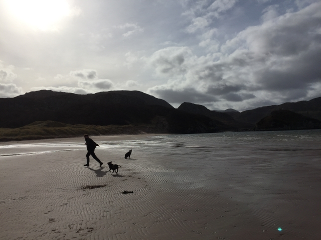 Charles Parkes running with two Staffordshire bull terriers on a Scottish beach