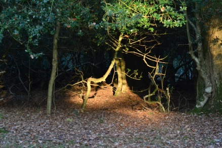 Light spotlighting a tree - Atmospheric inspiration