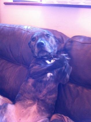 Asha sitting up - furry muses