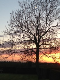 Single tree gold sunset - Atmospheric inspiration